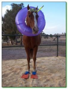cavall nadador